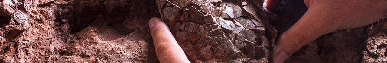 Mestrado em Paleontologia
