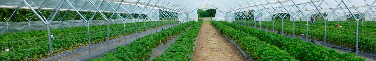Mestrado em Tecnologias de Produção e Transformação Agro-Industrial